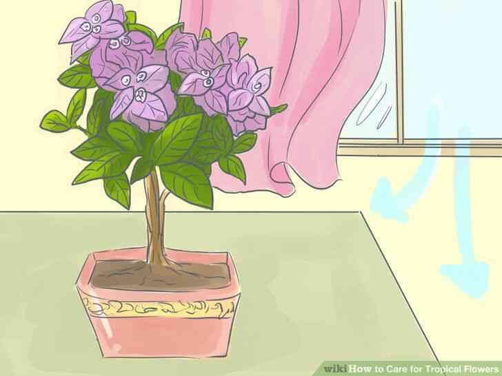 Imagen titulada de Atención para las Flores Tropicales Paso 10