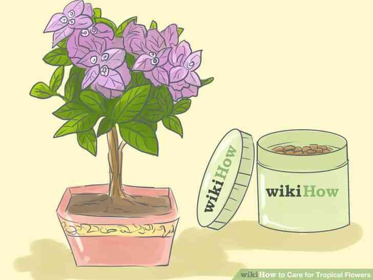 Imagen titulada de Atención para las Flores Tropicales Paso 11
