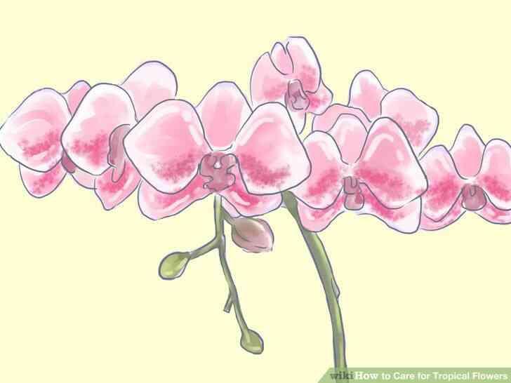 Imagen titulada de Atención para las Flores Tropicales Paso 12