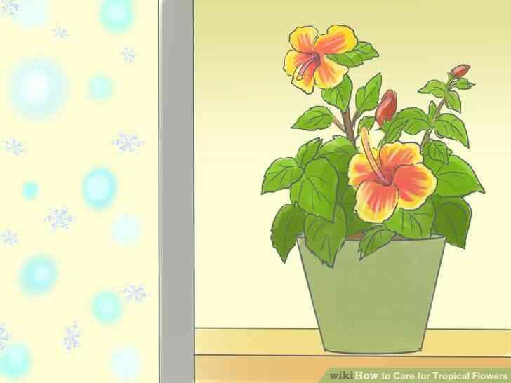 Imagen titulada de Atención para las Flores Tropicales Paso 14
