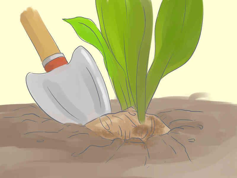 Cómo cuidar las Flores Tropicales