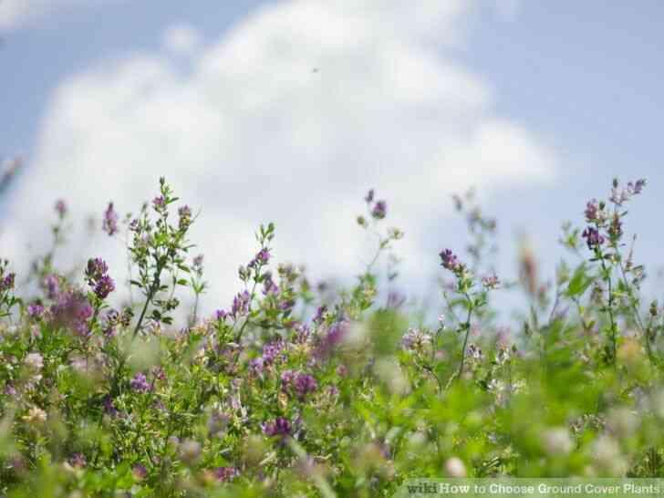 Imagen titulada Elegir Plantas de cobertura del Suelo Paso 2