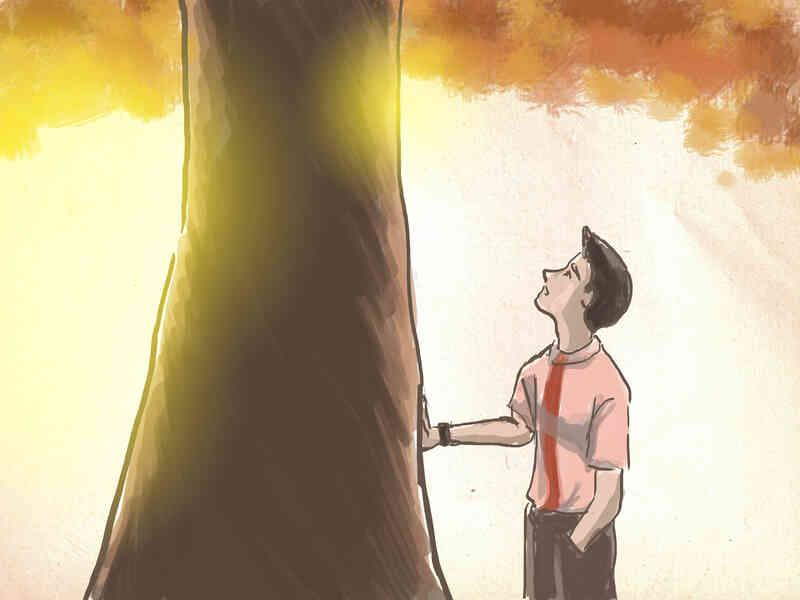 Cómo Elegir los Árboles de Arce Japonés