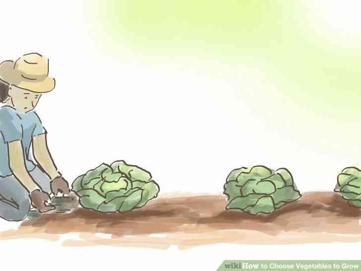 Imagen titulada Elegir Verduras para Crecer Paso 3Bullet1