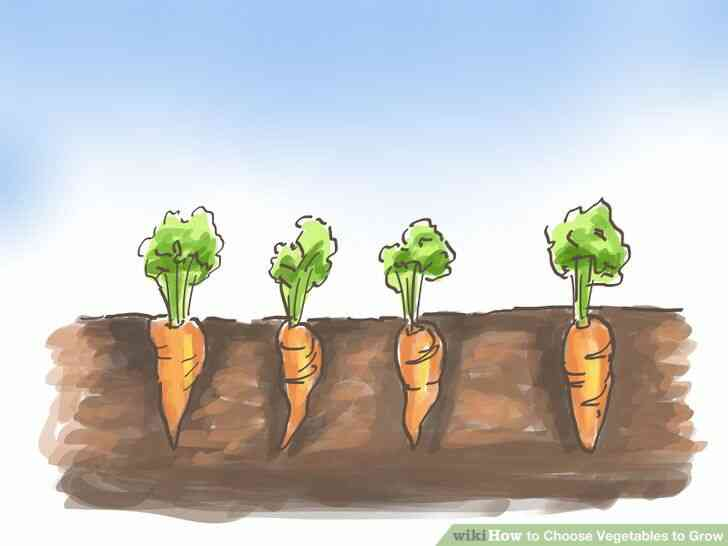 Imagen titulada Elegir Verduras para Crecer Paso 1Bullet3