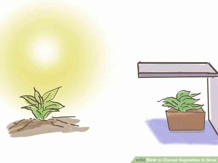 Imagen titulada Elegir Verduras para Crecer Paso 2Bullet1