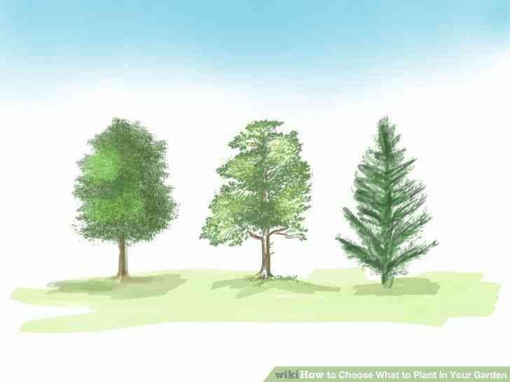 Imagen titulada Elegir Qué Plantar en Tu Jardín Paso 3Bullet2