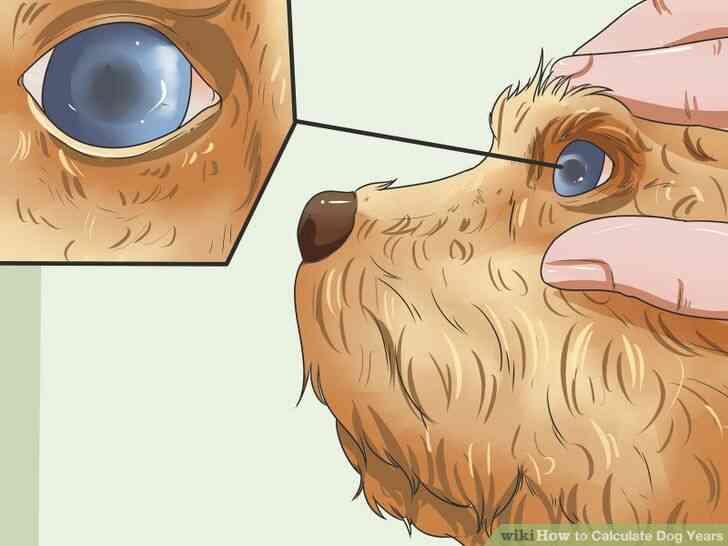 Imagen titulada Calcular los Años de Perro Paso 7
