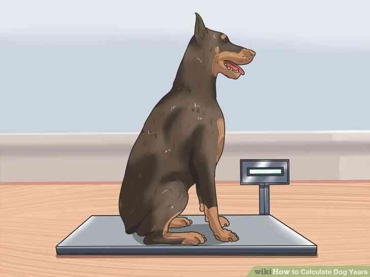 Imagen titulada Calcular los Años de Perro Paso 10