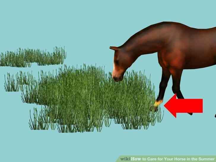 Imagen titulada el Cuidado de Su Caballo en el Verano Paso 3