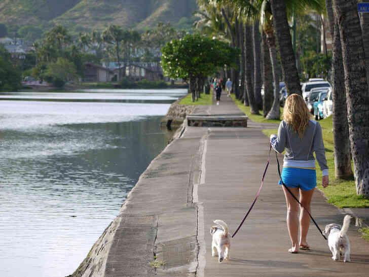 Imagen titulada Lo que es un lugar para pasear a los perros de Honolulu