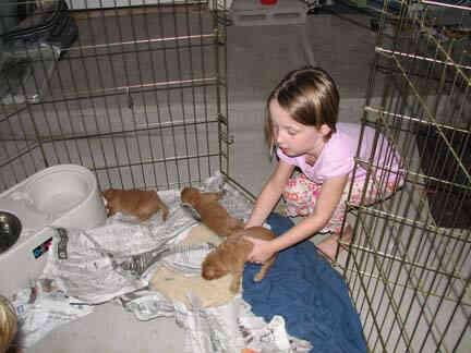 Imagen titulada Faye y con los cachorros