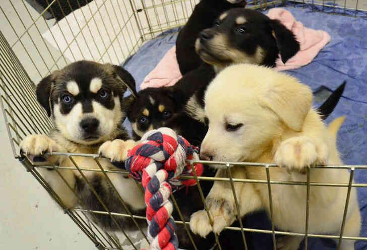 Imagen titulada Cachorros!