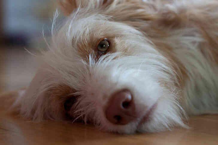 Imagen titulada Sueño del perro