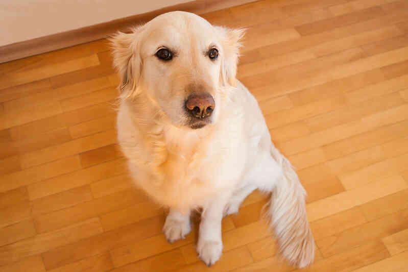 Cómo Elegir un paseador de Perros